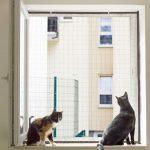 Teleskopstange Fenster Fenstersicherung Fr Katzen Mit Einem Netzrahmen Einbruchschutz Nachrüsten Winkhaus Absturzsicherung Einbauen Schallschutz Rostock Fenster Teleskopstange Fenster