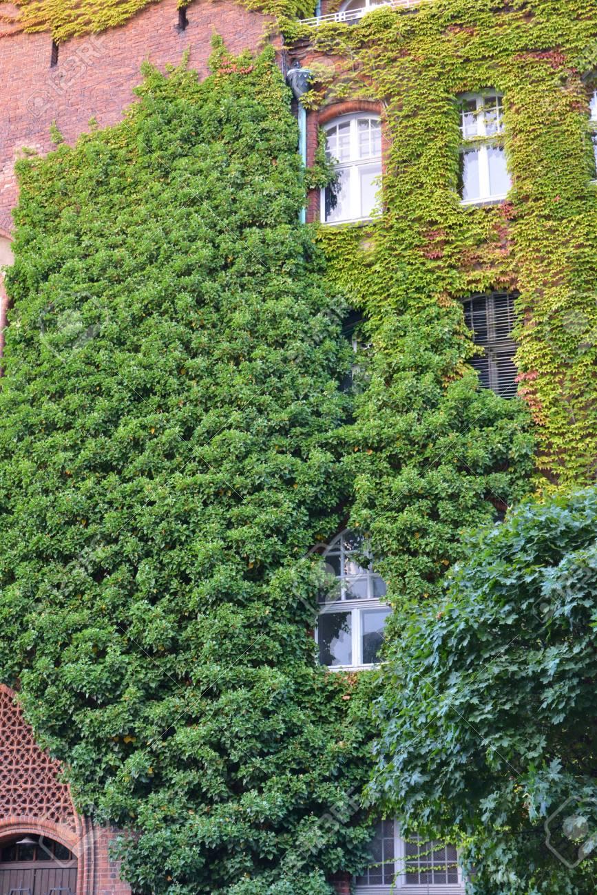 Full Size of Diy Vertical Pdf Pots Plans Indoor Watering Wall Plants Kit Vertikal Garten Vegetable Haus Mit Natrlichen Grnpflanzen Als Garten Vertikal Garten