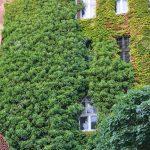 Vertikaler Garten Garten Vertikaler Garten Spielgeräte Für Schaukelstuhl Fussballtor Sichtschutz Im Led Spot Versicherung Sonnenschutz Liege Sitzgruppe Klettergerüst