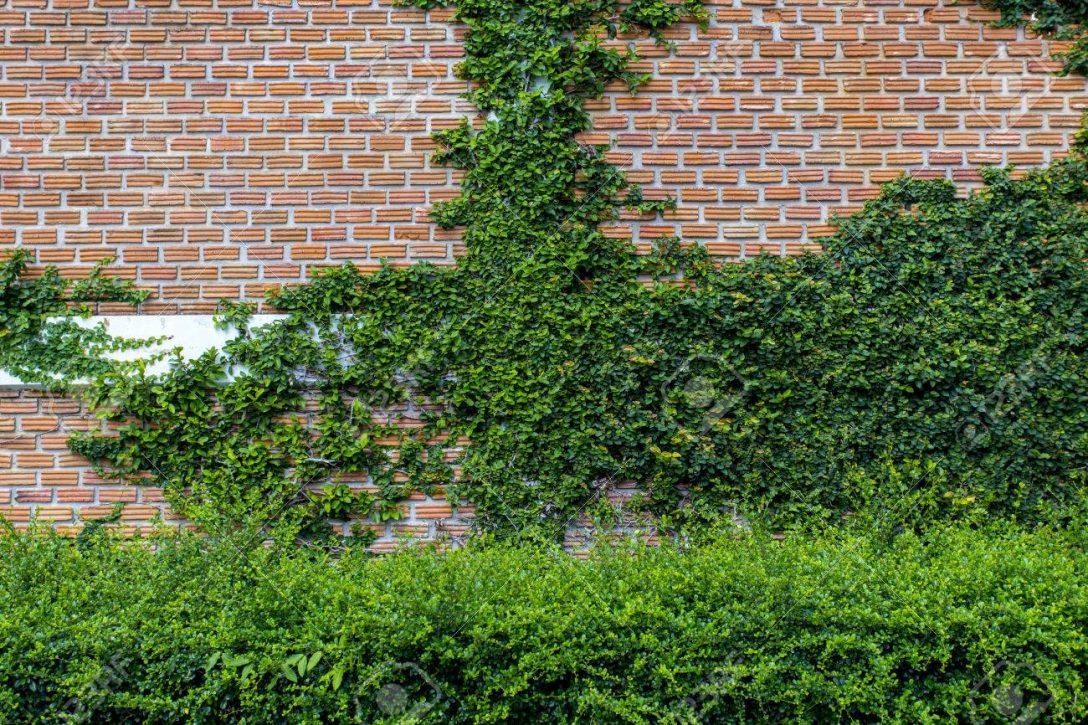 Large Size of Vertikal Garten Balkon Vertical Indoor Kit Systems Watering Pdf Kletterpflanze Auf Mauer Kann Auch Sagen Paravent Bewässerung Automatisch Eckbank Garten Vertikal Garten