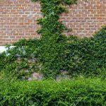 Vertikal Garten Garten Vertikal Garten Balkon Vertical Indoor Kit Systems Watering Pdf Kletterpflanze Auf Mauer Kann Auch Sagen Paravent Bewässerung Automatisch Eckbank