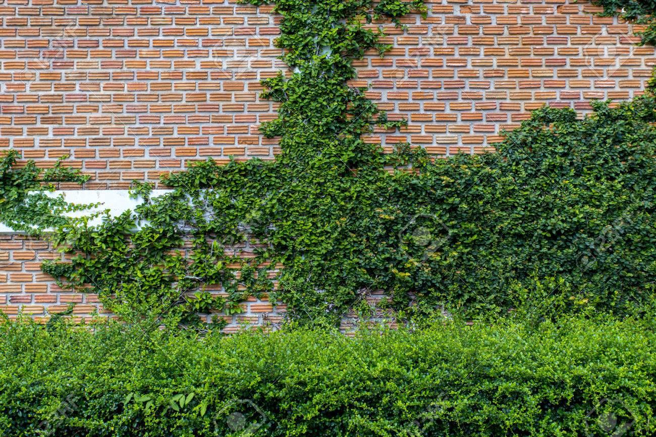 Full Size of Vertikal Garten Balkon Vertical Indoor Kit Systems Watering Pdf Kletterpflanze Auf Mauer Kann Auch Sagen Paravent Bewässerung Automatisch Eckbank Garten Vertikal Garten