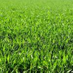 Bewässerungssysteme Garten Test Garten Versenkbare Rasensprenger Ihr Kompletter Ratgeber Sitzbank Garten Pavillion Und Landschaftsbau Berlin Led Spot Truhenbank Bewässerungssysteme Test