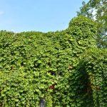 Vertikaler Garten Garten Vertikaler Garten Haus Mit Natrlichen Grnpflanzen Als Loungemöbel Holz Und Landschaftsbau Hamburg Relaxsessel Trennwand Rattanmöbel Lounge Set Schwimmingpool