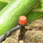 Bewässerungssysteme Garten Test Garten Automatische Bewsserung Planen Und Installieren Meine Garten Zaun Stapelstuhl Vertikal Spielhaus Holz Lounge Möbel Gaskamin Spielturm Loungemöbel