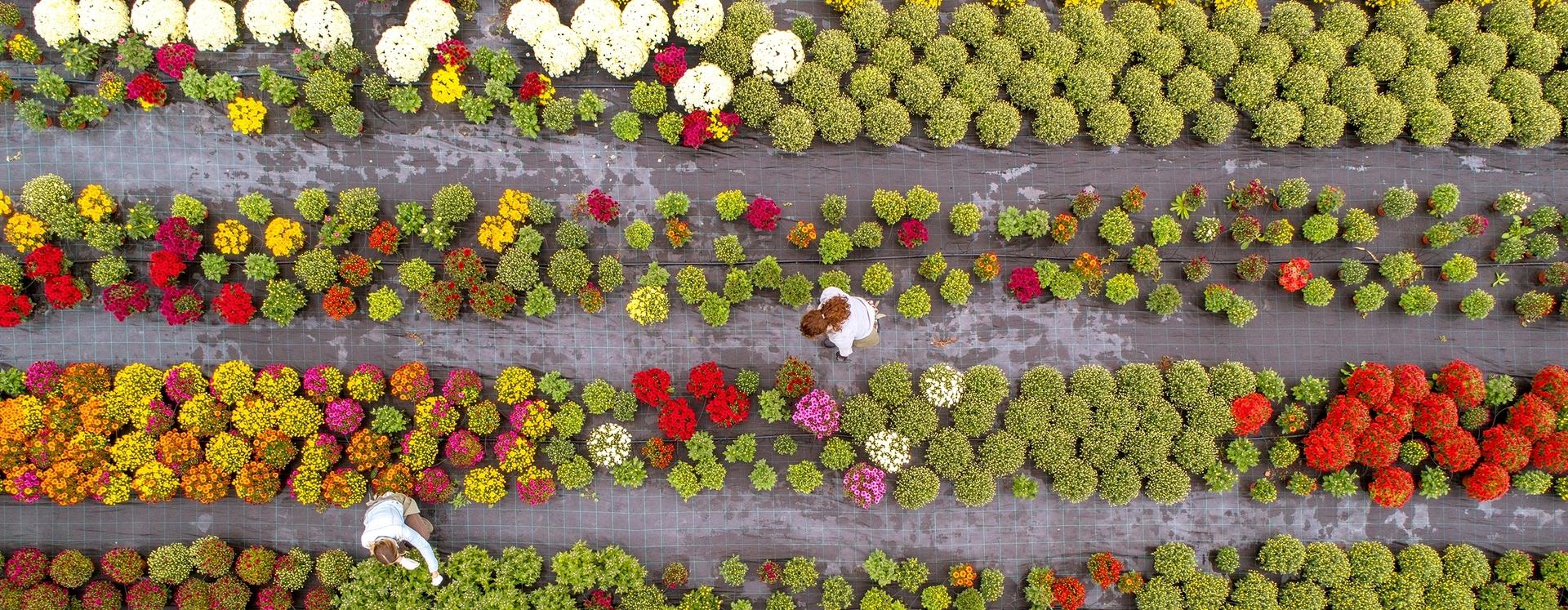 Full Size of Garten Versicherung Ergo Huk24 Huk Allianz Versicherungen Versichern Generali Vergleich Devk Check24 Brunnen Im Whirlpool Aufblasbar Pavillion Led Spot Garten Garten Versicherung