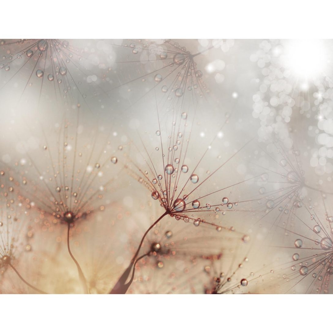 Large Size of Fototapete Blumen Vlies Pusteblume Tapete Wandbilder Xxl Schlafzimmer Fenster Küche Wohnzimmer Fototapeten Wohnzimmer Fototapete Blumen