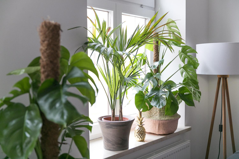 Full Size of Deko Fensterbank Ein Kleiner Dschungel In Unserer Wohnung Josie Wohnzimmer Badezimmer Dekoration Für Küche Wanddeko Schlafzimmer Wohnzimmer Deko Fensterbank