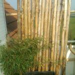 Bambus Sichtschutz Obi Wohnzimmer Bambus Sichtschutz Obi Schweiz Kunststoff Balkon Für Fenster Regale Garten Holz Einbauküche Nobilia Sichtschutzfolie Küche Immobilien Bad Homburg Bett