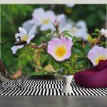 Fototapete Blumen Wohnzimmer Fototapete Blumen Rosa Blumenwiese Vlies 3d Bunte Komar Kaufen Fototapeten Dunkel Aquarell Rosen Wohnzimmer Fenster Schlafzimmer Küche