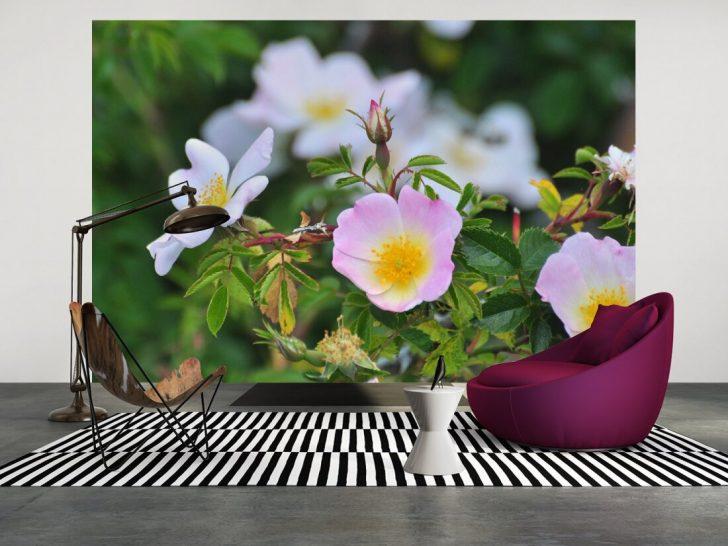 Medium Size of Fototapete Blumen Rosa Blumenwiese Vlies 3d Bunte Komar Kaufen Fototapeten Dunkel Aquarell Rosen Wohnzimmer Fenster Schlafzimmer Küche Wohnzimmer Fototapete Blumen