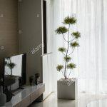 Eine Dekoration Pflanze In Eckigen Topf Im Wohnzimmer Setzen Sofa Kleines Deko Vorhänge Deckenlampen Modern Vinylboden Bilder Schrank Board Deckenleuchten Wohnzimmer Dekoration Wohnzimmer