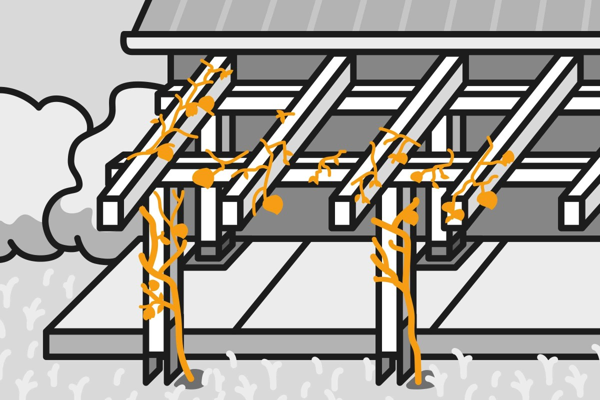 Full Size of Pergola Bauen Anleitung Von Hornbach Dusche Einbauen Fenster Rolladen Nachträglich Küche Velux Kopfteil Bett Selber 140x200 180x200 Pool Im Garten Wohnzimmer Pergola Bauen