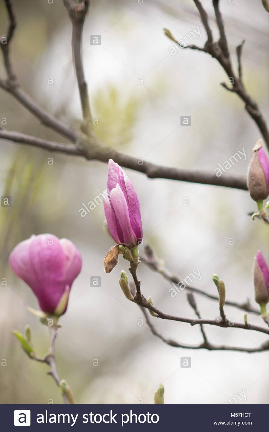 Full Size of Magnolia Farbe Wohnzimmer Magnolia Farbe