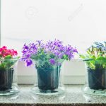 Fensterbank Schne Mit Gras Blumen Tpfe Auf Wohnzimmer Fensterbank Dekorieren