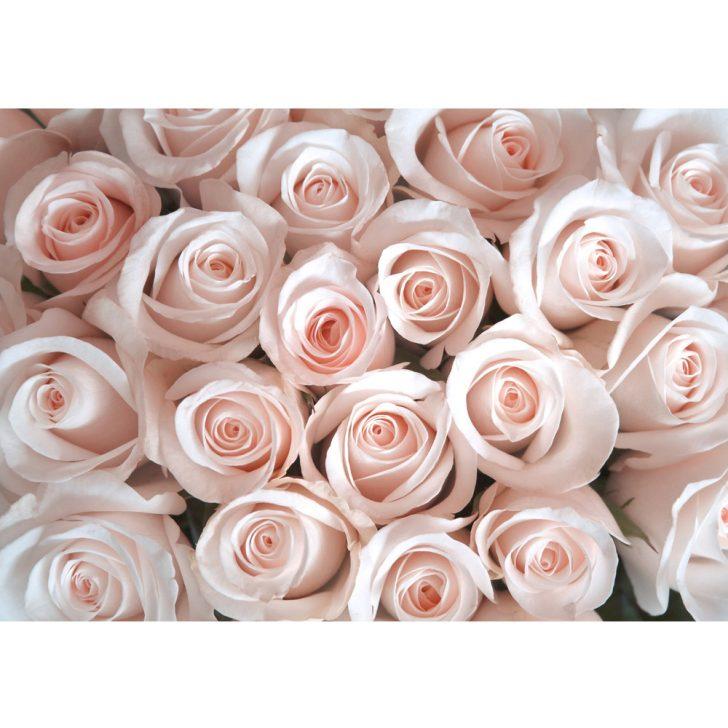 Fototapete Blumen Komar Fototapeten 3d Bunte Blumenwiese Kaufen Rosen Dunkel Vlies Weiss Schlafzimmer Fenster Wohnzimmer Küche Wohnzimmer Fototapete Blumen