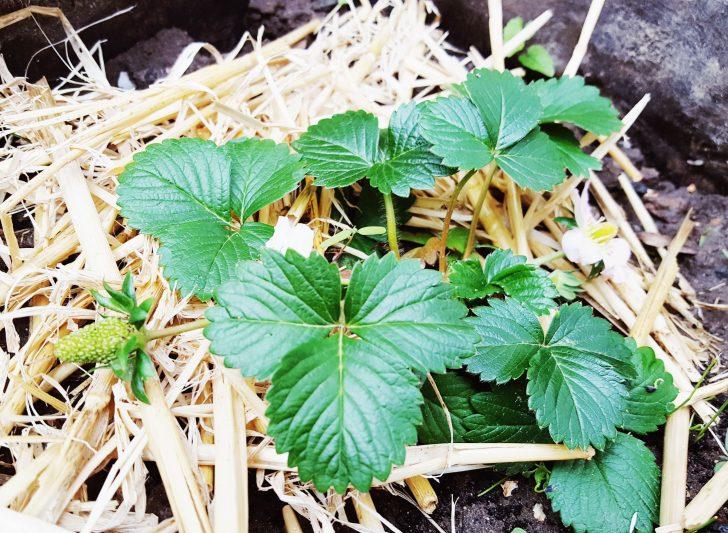 Medium Size of Im Hochbeet April Garten Relaxsessel Aldi Wohnzimmer Hochbeet Aldi