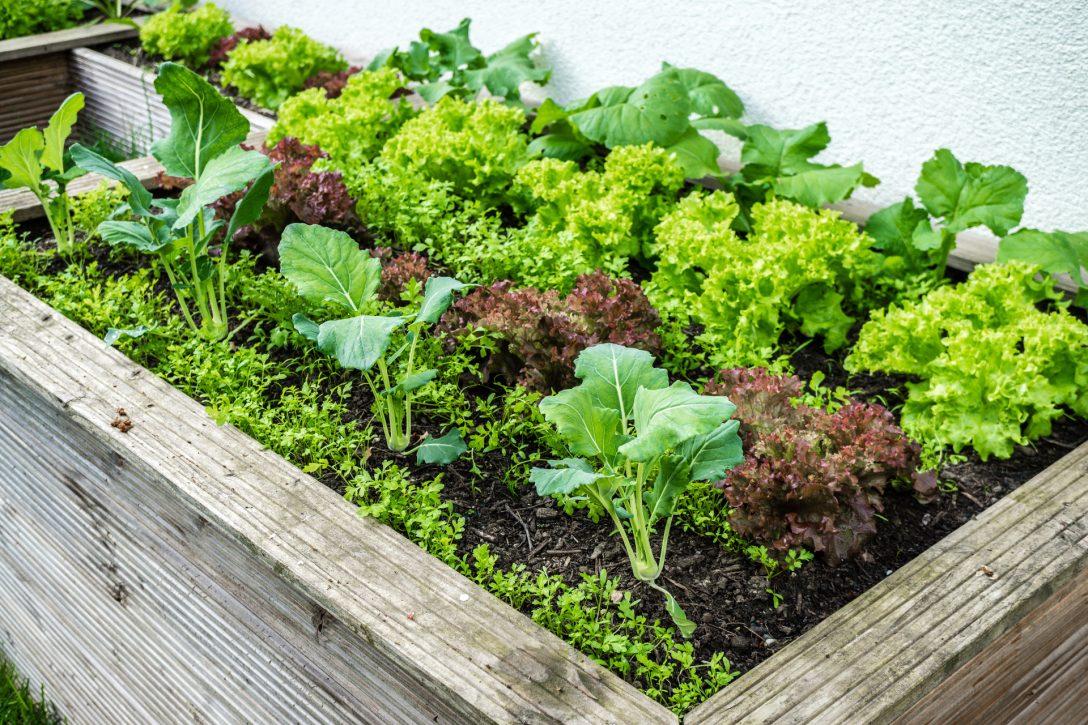 Large Size of Low Budget Hochbeet Selber Bauen Anleitung Tipps Zur Bepflanzung Garten Relaxsessel Aldi Wohnzimmer Hochbeet Aldi