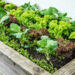 Low Budget Hochbeet Selber Bauen Anleitung Tipps Zur Bepflanzung Garten Relaxsessel Aldi Wohnzimmer Hochbeet Aldi