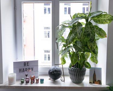 Fensterbank Dekorieren Wohnzimmer Dekoration Fensterbank Pflanzen 2 Josie Loves