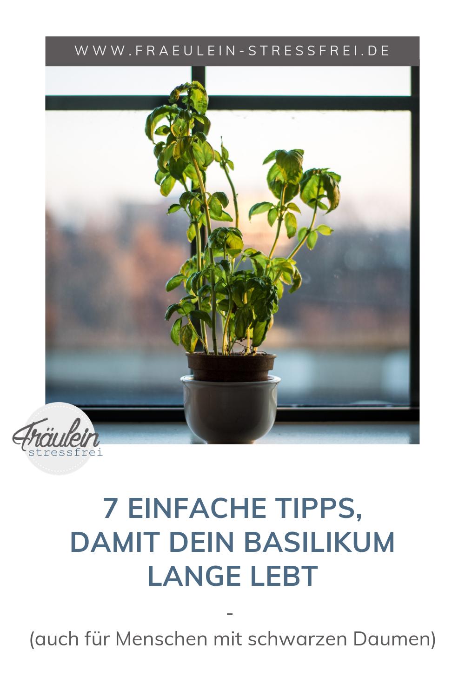 Full Size of Basilistressfreie Pflege Im Krutertopf Frulein Stressfrei Kräutertopf Küche Wohnzimmer Kräutertopf