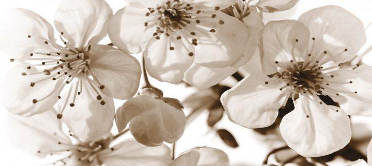 Medium Size of Fototapete Blumen Tapete Blte Orchidee 202x90cm Fototapeten Wohnzimmer Küche Schlafzimmer Fenster Wohnzimmer Fototapete Blumen