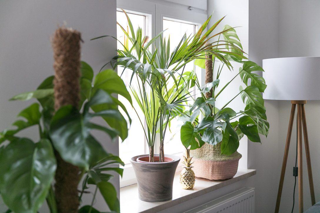 Large Size of Fensterbank Deko Ein Kleiner Dschungel In Unserer Wohnung Josie Wohnzimmer Fensterbank Dekorieren