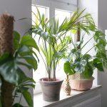 Fensterbank Dekorieren Wohnzimmer Fensterbank Deko Ein Kleiner Dschungel In Unserer Wohnung Josie