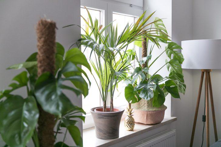 Medium Size of Fensterbank Deko Ein Kleiner Dschungel In Unserer Wohnung Josie Wohnzimmer Fensterbank Dekorieren