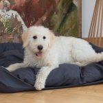 Hundebett Flocke Zooplus 90 Cm 125 Kaufen Bitiba Xxl Wolke 120 Cuma Mit Abgesenktem Einstieg Und Randrolle Wohnzimmer Hundebett Flocke
