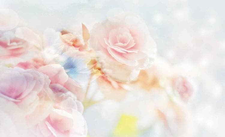 Fototapete Blumen Dunkel Rosa Vintage Schlafzimmer Fototapeten 3d Blumenwiese Weiss Bunte Komar Kaufen Rosen Aquarell Vlies Küche Wohnzimmer Fenster