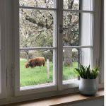Schnsten Ideen Fr Fensterbank Fensterbrett Deko Wohnzimmer Fensterbank Dekorieren