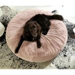 Hundebett Flocke Wohnzimmer Hundebett Flocke Xxl 125 Cm 90 Kaufen Wolke 120 Zooplus Bitiba Einzelstck Hundekissen Wouf Pouf Kurzhaar Rose Wei Gre L