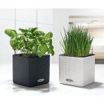 Lechuza Selbstbewssernder Pflanztopf Cube Color Deluxe Set Kräutertopf Küche Wohnzimmer Kräutertopf
