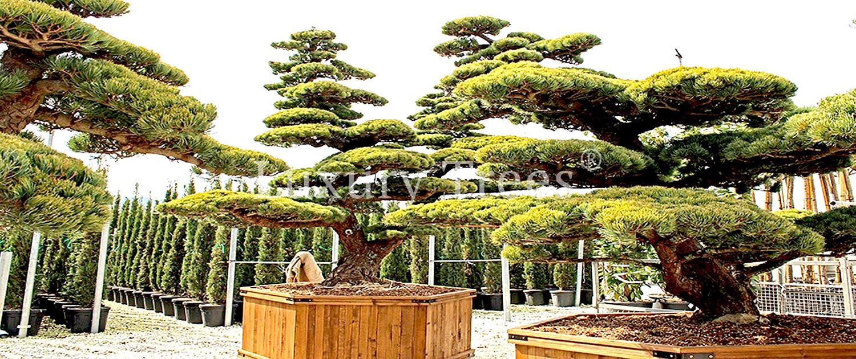 Full Size of Sichtschutz Holz Modern Aus Pflanzen Fr Garten Terrasse Luxurytrees Holzbrett Küche Deckenleuchte Schlafzimmer Esstische Massivholz Unterschrank Bad Holzhaus Wohnzimmer Sichtschutz Holz Modern