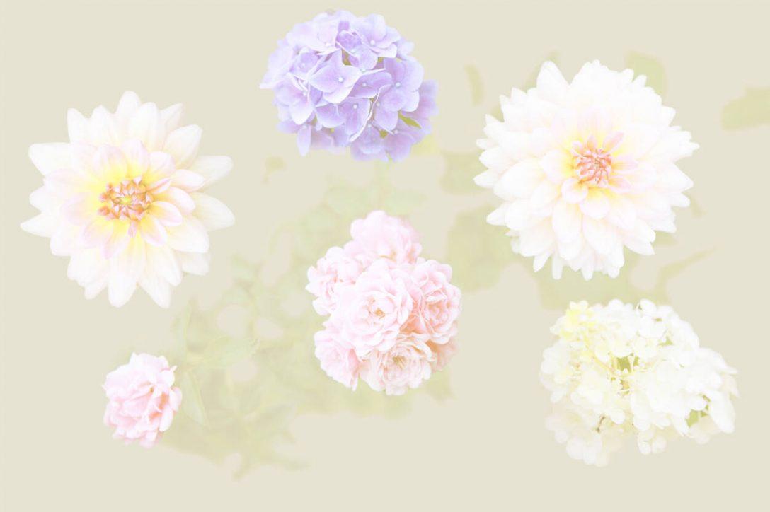 Large Size of Fototapete Blumen 3d Dunkel Blumenwiese Rosa Bunte Vlies Weiss Schlafzimmer Aquarell Komar Vintage Fototapeten Kaufen Rosen Architects Paper 470863 Küche Wohnzimmer Fototapete Blumen