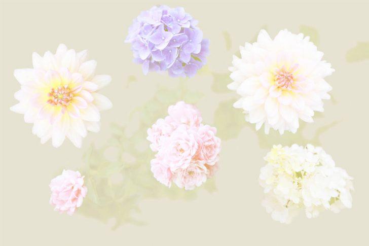Medium Size of Fototapete Blumen 3d Dunkel Blumenwiese Rosa Bunte Vlies Weiss Schlafzimmer Aquarell Komar Vintage Fototapeten Kaufen Rosen Architects Paper 470863 Küche Wohnzimmer Fototapete Blumen