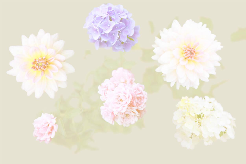 Full Size of Fototapete Blumen 3d Dunkel Blumenwiese Rosa Bunte Vlies Weiss Schlafzimmer Aquarell Komar Vintage Fototapeten Kaufen Rosen Architects Paper 470863 Küche Wohnzimmer Fototapete Blumen