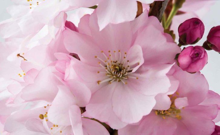 Medium Size of Fototapete Blumen Aquarell Rosa Dunkel Rosen 3d Bunte Blumenwiese Vlies Küche Fenster Schlafzimmer Fototapeten Wohnzimmer Wohnzimmer Fototapete Blumen