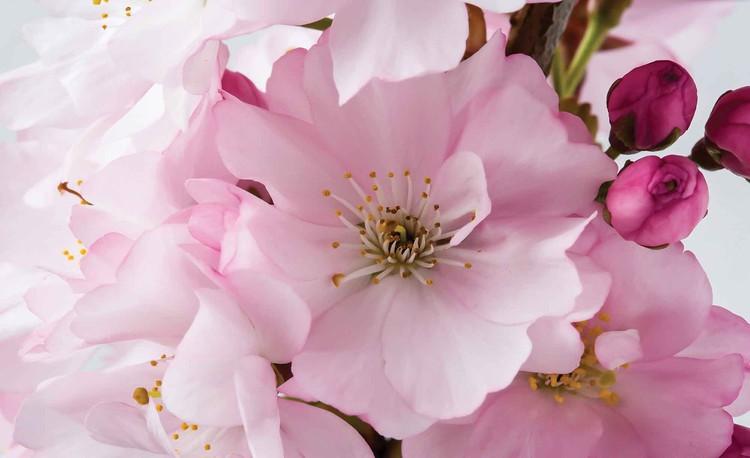 Full Size of Fototapete Blumen Aquarell Rosa Dunkel Rosen 3d Bunte Blumenwiese Vlies Küche Fenster Schlafzimmer Fototapeten Wohnzimmer Wohnzimmer Fototapete Blumen