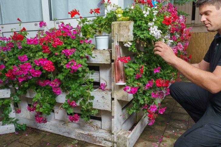 Medium Size of Sichtschutz Paletten Bepflanzen So Gestalten Sie Ihren Eigenen Blickfang Garten Fenster Sichtschutzfolie Einseitig Durchsichtig Bett Aus Kaufen Für Wpc Wohnzimmer Sichtschutz Paletten