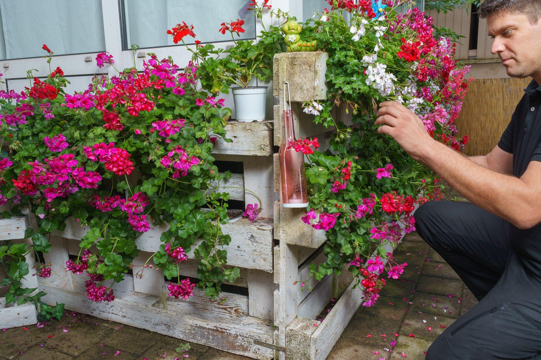 Full Size of Sichtschutz Paletten Bepflanzen So Gestalten Sie Ihren Eigenen Blickfang Garten Fenster Sichtschutzfolie Einseitig Durchsichtig Bett Aus Kaufen Für Wpc Wohnzimmer Sichtschutz Paletten