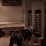 Bett Paletten Diy Aus Palettenbett Selbst Bauen Dakota Home Regale Europaletten Betten Hamburg Cars Ohne Füße Massiv Hohes 190x90 120 Cm Breit Hülsta Luxus Wohnzimmer Bett Paletten