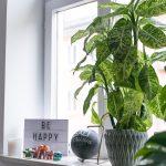 Dekoration Fensterbank Pflanzen 6 Josie Loves Wohnzimmer Fensterbank Dekorieren