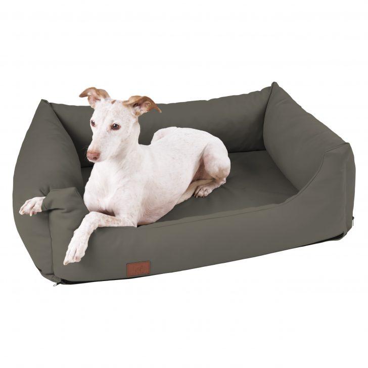Medium Size of Hundebett Flocke Orthopdisches Buddy Wohnzimmer Hundebett Flocke
