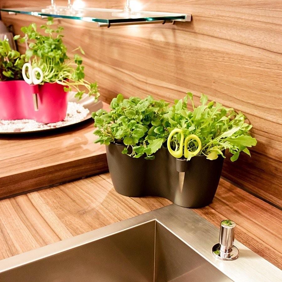 Full Size of Krutertopf Duo Anthrazit Brussels Herbs Online Kaufen Bestellen Kräutertopf Küche Wohnzimmer Kräutertopf