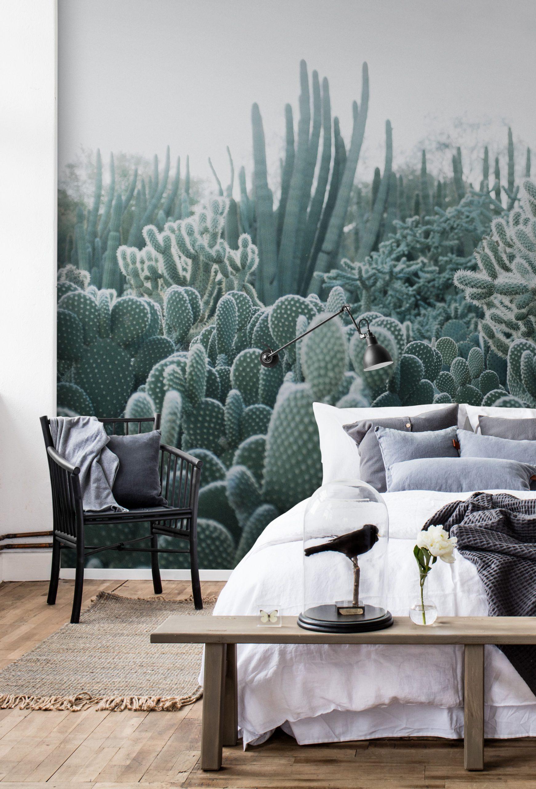 Full Size of Cacti In 2020 Schlafzimmer Tapete Led Deckenleuchte Schränke Deckenlampe Komplette Landhausstil Weiß Nolte Komplett Guenstig Wiemann Vorhänge Truhe Lampen Wohnzimmer Schlafzimmer Tapeten Ideen