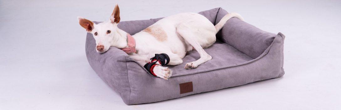 Large Size of Hundebett Flocke Doggy Fit Orthopdisches Fitness Wohnzimmer Hundebett Flocke