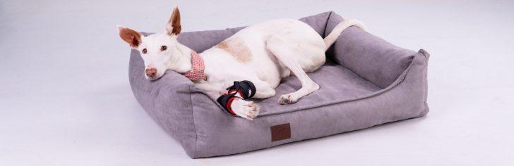 Medium Size of Hundebett Flocke Doggy Fit Orthopdisches Fitness Wohnzimmer Hundebett Flocke