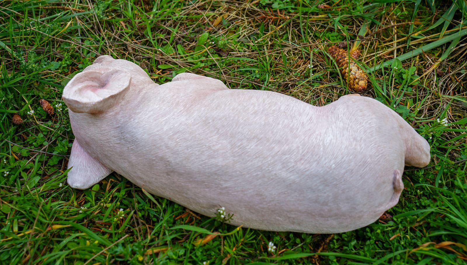 Full Size of Schweinchen Schlafend Glcksschwein Schwein Gartenfigur Garten Fußballtor Sonnenschutz Beistelltisch Relaxsessel Spielgerät Feuerstelle Loungemöbel Holz Wohnzimmer Skulptur Garten